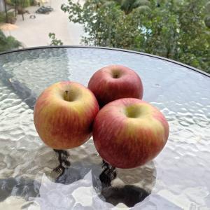 久々にマレーシアで安くて美味しいリンゴを食べた
