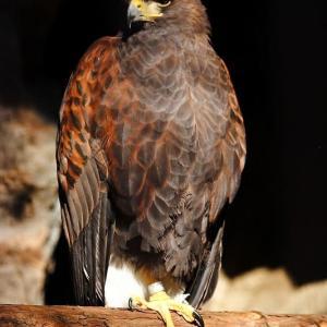 上野動物園の鳥 其の壱