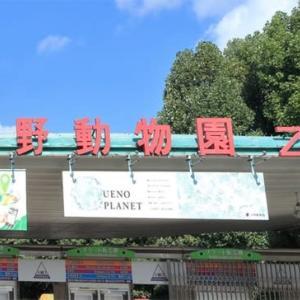 上野動物園の鳥 其の弐