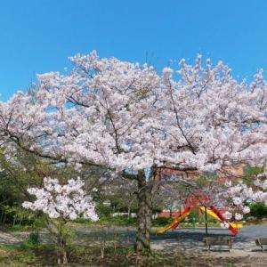 桜の季節です。OM-Dで撮影しました。