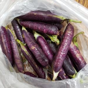 色鮮やか✨初めて出会ったツタンカーメン豆
