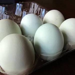 幸せの青い卵プリン(๑ơ ₃ ơ)♥