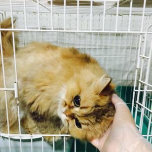 慢性腎不全の猫、めめちゃん(*꒦ິ³꒦ີ)