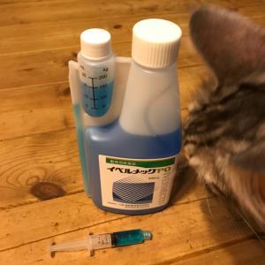 ヤギの予防接種