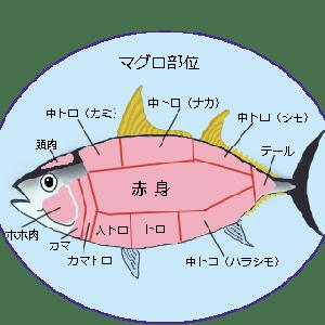 元鮨職人に聞いた魚と料理の話 マグロ編 2