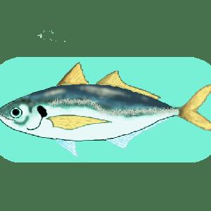 元鮨職人に聞いた魚と料理の話 あじ編