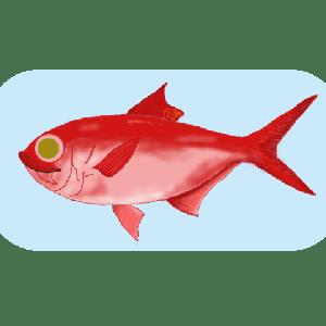 元鮨職人に聞いた魚と料理の話 金目鯛編