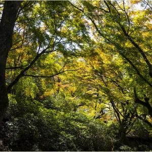 ~添田公園の紅葉と寒桜~