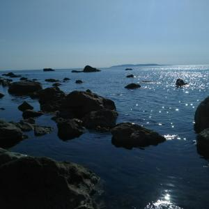 日本海新潟県バージョン✨