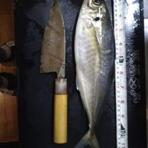 釣り鯵❗️