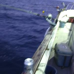 新潟東港電気釣り