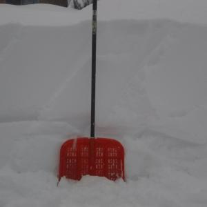 雪だよ雪☃️‼️