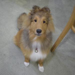 【迷子捜索・拡散希望】捜索中の逸走犬の情報拡散にご協力のお願い