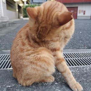 地域猫さんと出会う