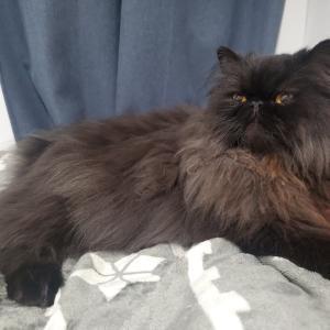 ツンデレ猫の基本