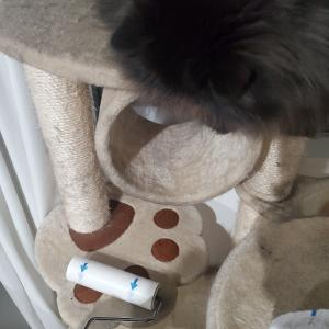 タワーを守る猫