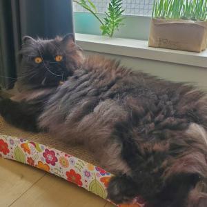 モデル猫さん募集します(=^ェ^=)