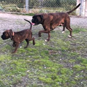 アーロンの娘、来訪。保護犬のニコ君と・・・