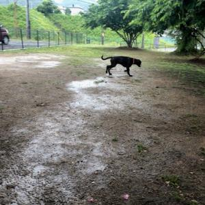 雨の日の散歩デビュー・・・(笑)
