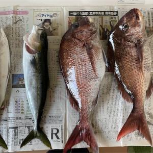 横浜町から出港して真鯛釣り