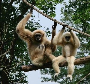 天王寺動物園は入場料もお手頃で小さな子どもは大喜び!ふれあい広場がおすすめ