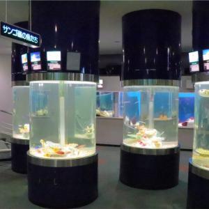サンピアザ水族館観光レビュー!お魚を紹介!