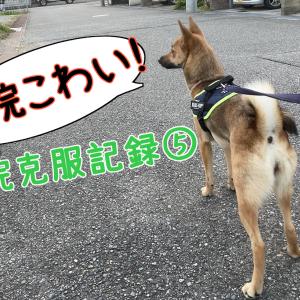 怖がり犬の病院克服記録-3か月~4か月目-