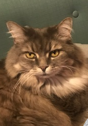 忘れかけたジェイソンからのラインーMessages from Profile#7- Jason, the cat guy