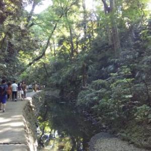 東京で自然を満喫するデートがしたいなら等々力渓谷がおすすめ!