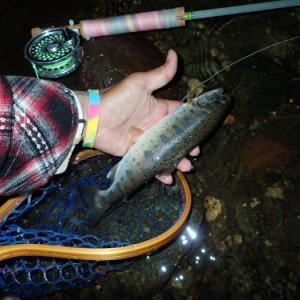 イブニング!!そして、週末はまた釣りに行きたいなぁ~と(笑)