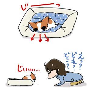 驚異の視力・9月17日のちくわ/【犬マンガ】