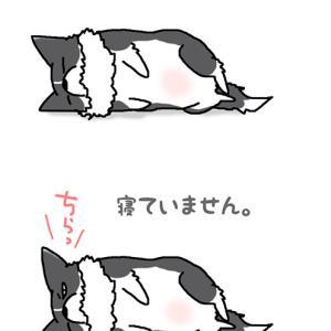 寝ていません・10月21日のピピぞう/【犬マンガ】