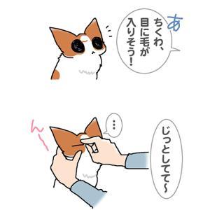 じっとしててね・10月23日のちくわ/【犬マンガ】