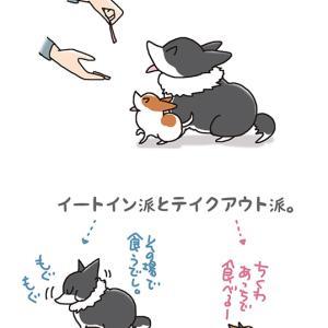 イートイン、テイクアウト・11月12日のピピちく/【犬マンガ】