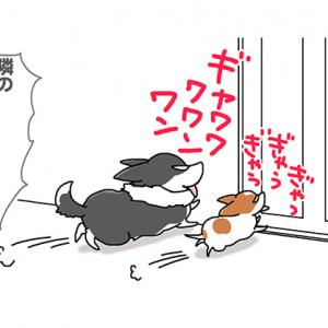 やりすぎ番犬・12月4日のピピちく/【犬マンガ】
