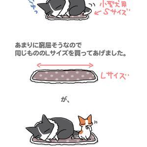変わらぬ面積・2月26日のピピぞう/【犬マンガ】
