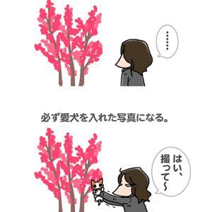 花の写真にあらず・2月27日の飼い主/【犬マンガ】