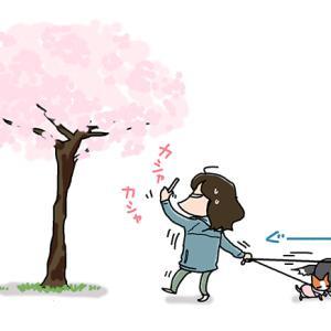 ブレる桜・4月8日の飼い主/【犬マンガ】