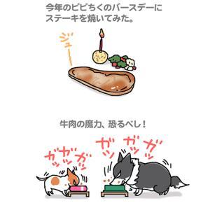 やはり牛肉!・4月16日のピピちく/【犬マンガ】