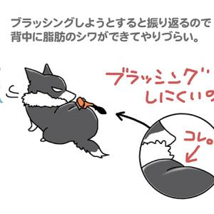 脂肪のシワがね・4月20日のピピぞう/【犬マンガ】