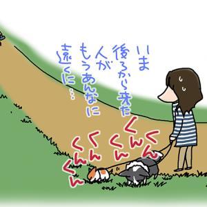 長いが短い散歩・5月12日のピピちく/【犬マンガ】