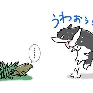 草むらでびっくり・6月1日のピピぞう/【犬マンガ】
