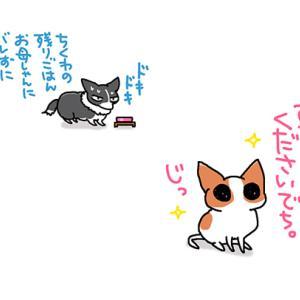 ゼイタク犬の後ろの葛藤・6月9日のピピちく/【犬マンガ】