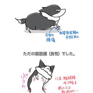 ピピぞうさんの腫瘍・6月11日のピピぞう/【犬マンガ】