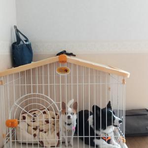 まず、カーペットを貼る/神奈川犬生活