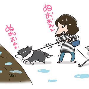 梅雨時に繰り返される戦い・7月1日のピピちく/【犬マンガ】