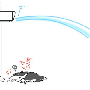 風を読めない犬・7月2日のピピぞう/【犬マンガ】