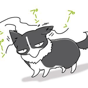 狙われる耳・7月3日のピピぞう/【犬マンガ】