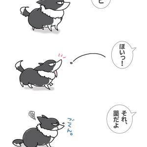 少しはうたがえ・7月30日の飼い主/【犬マンガ】