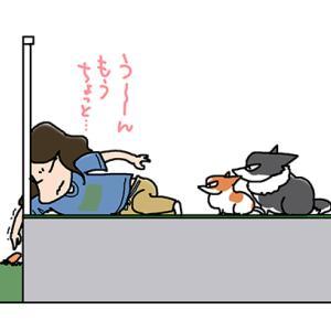 隣におもちゃ・8月7日の飼い主/【犬マンガ】